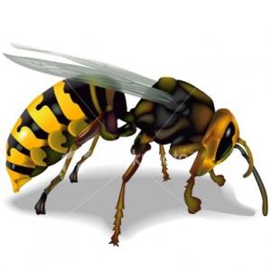 Lebah Related Keywords Suggestions Lebah Long Tail Keywords